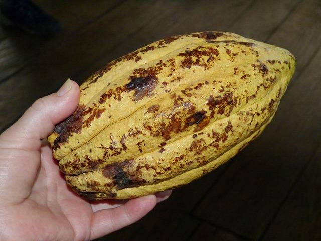 surový kakaový bob