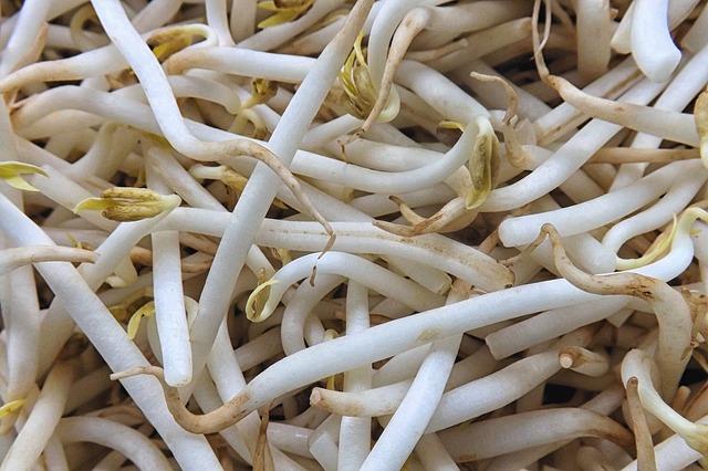 Naklíčené fazole